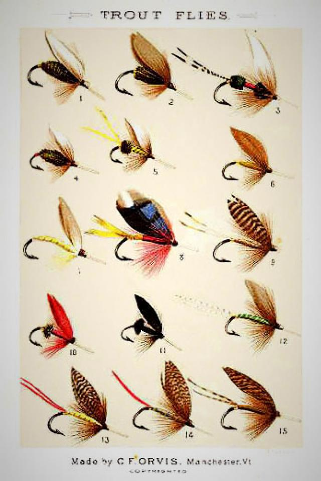 trout Flies from Charles F. Orvis Fishing with the Fly Large Photo