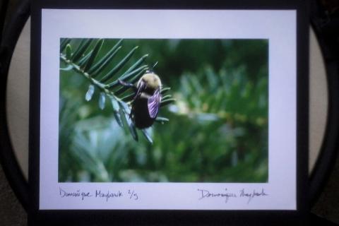Bee Photograph Photo
