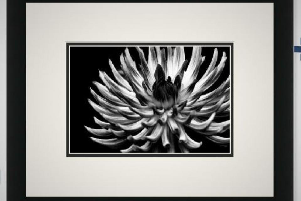 Exhilarate Framed Photo Large Photo