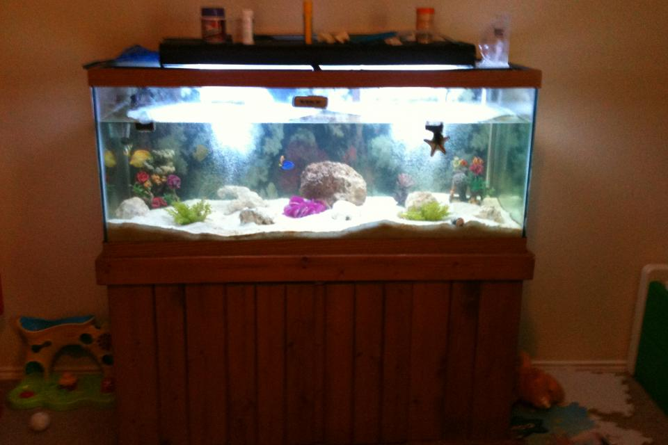 75 gallon saltwater fish tank 75 gallon saltwater fish for Youtube fish tank