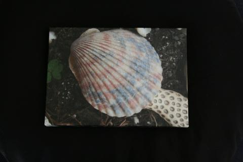 Pink Shell Photo