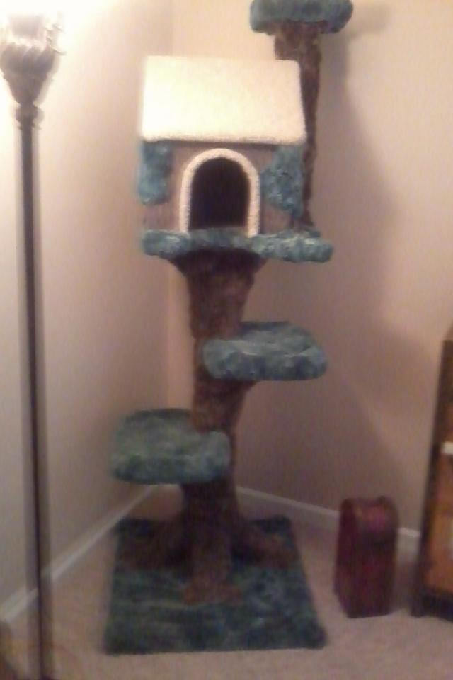 ***BEAUTIFUL INDOOR CATHOUSE Photo