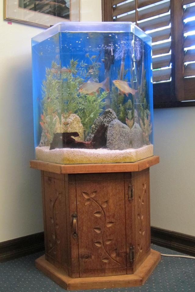 100 gallon fish tank 100 100 gallon fish tank with all for Amazon fish tanks for sale