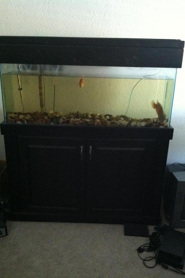 55 gallon tank Photo