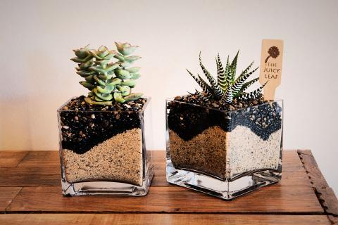 4x4 Planter Cube/Cylinder Photo