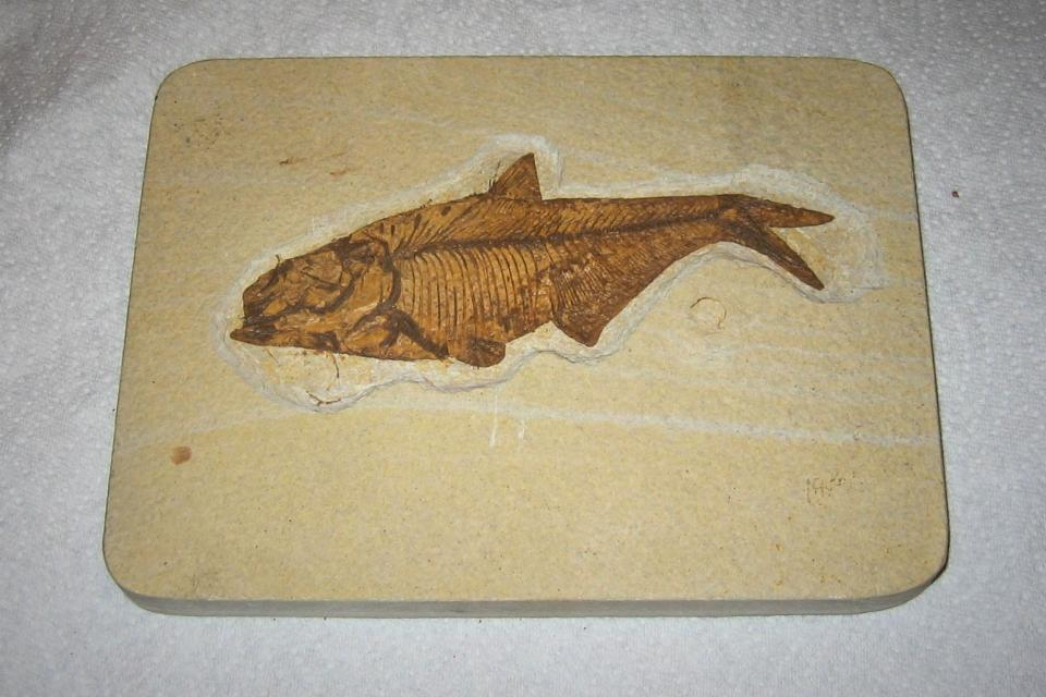fossil fish Large Photo