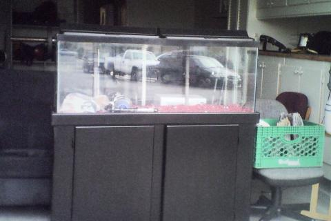 Awesome fish tank great price a must see Photo